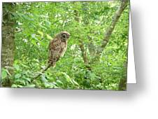 Owl II Greeting Card