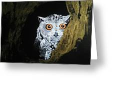 Owl In Tree Greeting Card