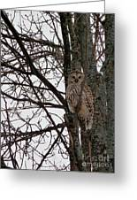 Owl In Winter Greeting Card