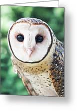 Owl Insight Greeting Card
