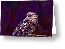 Owl Little Owl Bird Animal  Greeting Card