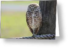 Owl On A Rope Greeting Card