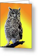 Owl On Branch Greeting Card