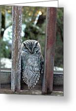 Owl On Deck Greeting Card