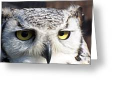 Owl Reflections Greeting Card by Vera Gadman