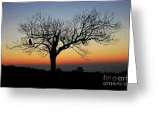 Owl Sunset Greeting Card