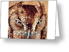 Owl Who? -brown Owl Greeting Card