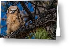 Owlet In A Fir Tree Greeting Card