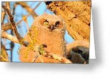 Owlet In A Spring Sunrise Greeting Card