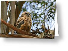 Owlet Lookout Greeting Card