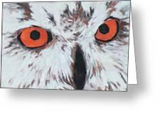 Owlish Eyes Greeting Card