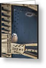 Owls And Trestles Greeting Card