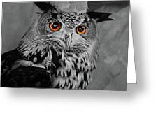 Owls Eye Greeting Card