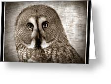 Owls Eyes -vintage Series Greeting Card