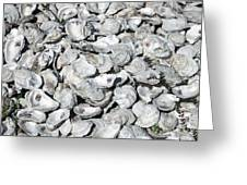 Oyster Shells On Cumberland Island Greeting Card