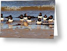 Oystercatchers Greeting Card