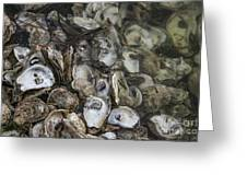 Oysters Four Greeting Card