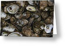 Oysters Two Greeting Card