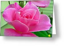 p1050202b  Pink Rose Greeting Card