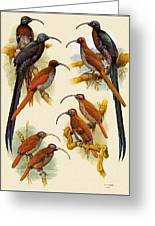 pa FB WilliamTCooper LesserBirdsOfParadise Penny Olsen Greeting Card