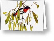 pa TonyOliver AustralianBirds 13 MistletoeBird Tony Oliver Greeting Card
