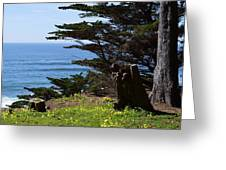 Pacific Beauty Greeting Card