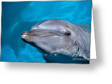 Pacific Bottlenose Dolphi Greeting Card