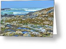 Pacific Coast Tide Pools Greeting Card