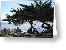 Pacific Cypress View Greeting Card