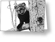 Pacific Fisher Greeting Card