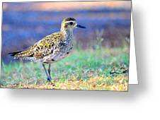 Pacific Golden Plover - 2 Greeting Card
