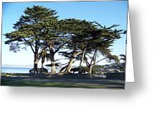 Pacific Grove Cypress Grove Greeting Card