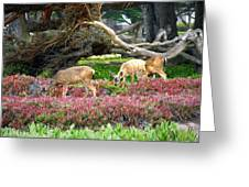 Pacific Grove Deer Feeding Greeting Card