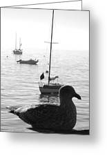 Pacific Gull Greeting Card