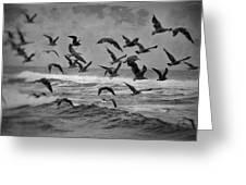 Pacific Gulls Greeting Card