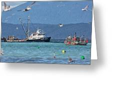 Pacific Ocean Herring Greeting Card