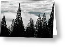 Pacific Pines Greeting Card