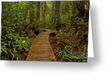 Pacific Rim National Park Boardwalk Greeting Card