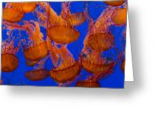 Pacific Sea Nettle Cluster 1 Greeting Card