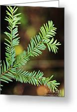Pacific Yew Greeting Card