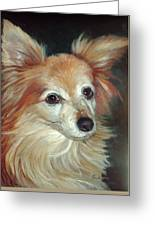 Paco The Papillion Greeting Card