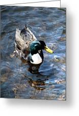 Paddling Peacefully Greeting Card