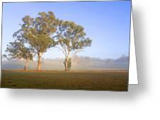 Paddock Sunrise Greeting Card