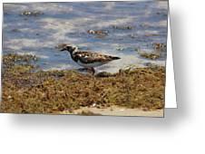 Padre Island National Park Greeting Card