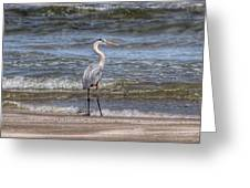 Padre Island National Seashore  Greeting Card