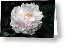 Paeon Greeting Card