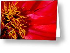 Paeonia 1 Greeting Card