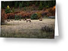 Pagosa Autumn Elk Greeting Card by Jason Coward