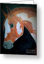 Paint Horse Color Pencil Greeting Card