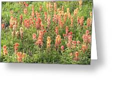 Paintbrush Beauties Greeting Card